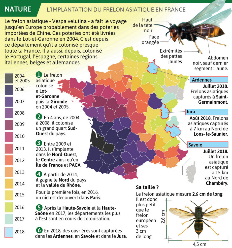 carte du frelon asiatique